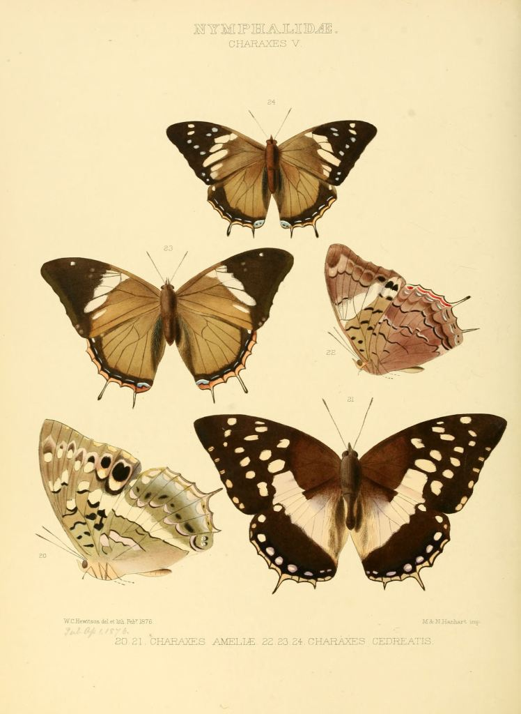 Illustrations_of_new_species_of_exotic_butterflies_Charaxes_V